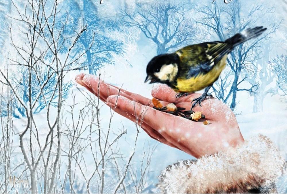 Экологическая акция «Покорми птиц»